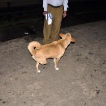 A three legged dog at Hatton station.