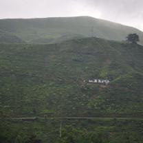 A house among a tea plantation.