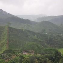 Distance houses between tea estates.