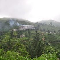 A tea factory.