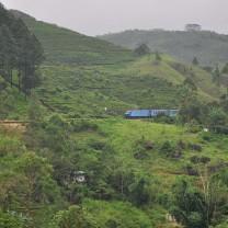 Colombo-Badulla train travelling across a tea garden.